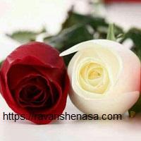 سمفونی زیبای ازدواج از دیدگاه مشاور ازدواج منطقه 1 یک-02122715886-02126851286